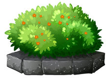 A flowering plant above the gray stone Royalty Free Stock Image