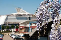Flowering plant in the background of a cruise ship Royalty Free Stock Photo