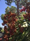 Flowering plant Stock Image