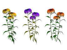 Flowering plant illustrations. A set of artistic illustrations of colorful flowering plants Royalty Free Stock Photo