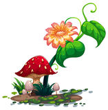 A flowering plant and mushrooms Stock Photography