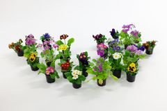 Flowering plants in black plastic pots Stock Image