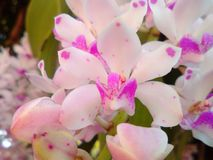 Flowering plants. Bouquet of orchids blooming beautiful and aroma Stock Photos