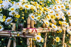 Flowering Plants with fencing Stock Photo