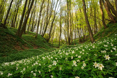 Flowering plants in forest, white flowers on background of trees Stock Images