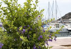Flowering plants in front of boats stock photo