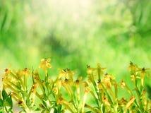 Flowering plants on green background in sunlight Stock Image