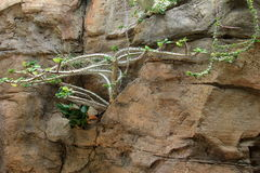 Flowering plants growing out from cracks in stone wall Royalty Free Stock Photos