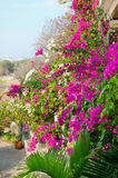 Flowering plants at house wall Royalty Free Stock Photos
