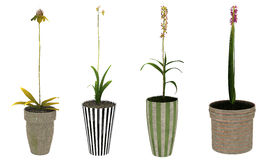 Flowering plants in pots Stock Photography