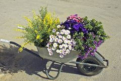 Flowering plants ready for the garden in springtime Stock Images