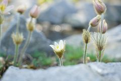 Flowering plants spotted Stock Photo