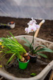 Flowering plants in a wheelbarrow Royalty Free Stock Photo