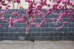 Flowering plum stock photography