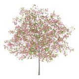 Flowering plum tree isolated on white. Background royalty free illustration
