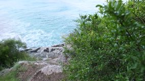 Flowering pomegranate fruit on the tree in Montenegro. Pomegrana. Te tree on the beach stock footage