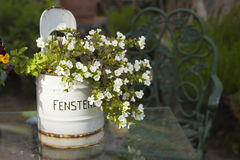 Flowering potted plant Stock Photo