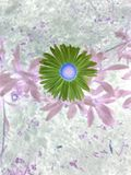 Purple daisy in a negative Stock Photos