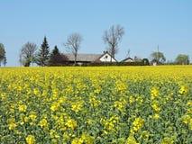 Flowering rape field and homestead Stock Photo