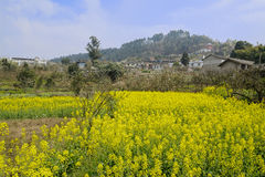 Flowering rape field before mountainside village in sunny spring Stock Photography