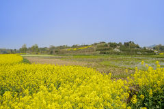Flowering rape fields near irrigated lands in sunny spring. Day,Chengdu,China Stock Photos