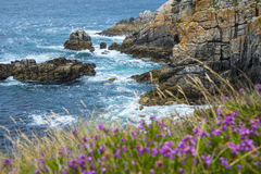 Flowering rocky coastline and sea Stock Photos