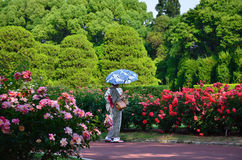 Free Flowering Rose Garden And Kimono Women, Japan. Royalty Free Stock Photos - 73982568