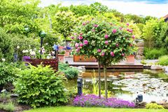 Flowering rosebush in beautiful garden with pond Stock Photos