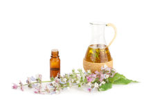Flowering sage and fragrant oil . Essential oil of sage and flowers on a white background Stock Images