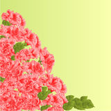Flowering shrub pink hibiscus vector Stock Photos