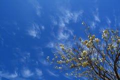 Flowering sky Royalty Free Stock Image