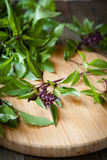 Flowering sprigs of basil on a cutting board Royalty Free Stock Photos