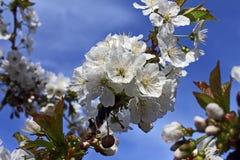 Flowering Stock Photos