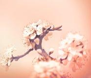 Flowering in spring Stock Image
