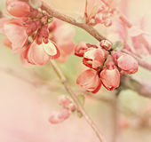 Flowering in spring. Beautiful buds royalty free stock photos