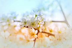 Flowering in spring - bud Royalty Free Stock Photo