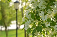 Flowering spring garden.Floral spring background, soft focus. Branches of blossoming tree in spring outdoors macro. Beautiful spring bokeh for design with stock images