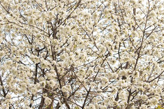 Flowering in spring Stock Photos
