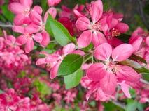 Flowering in spring time. Stock Photos