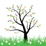 Flowering spring tree illustration background Royalty Free Stock Photo