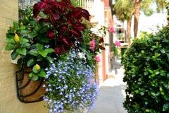 Flowering Street Royalty Free Stock Photos