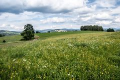 Flowering summer meadow with isolated trees and Jeseniky mountain range on the background near Stare Mesto pod Sneznikem in Czech. Flowering summer meadow with Stock Images