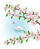 Flowering and Swan Royalty Free Stock Image
