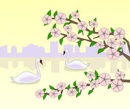 Flowering and Swans at Sunset. Royalty Free Stock Photography