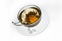 Flowering tea Royalty Free Stock Image