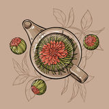 Flowering tea. Vector Illustration with flowering tea in  teapot on brown  background Stock Image