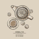 Flowering tea. Vector Illustration with flowering tea in  teapot and a cup Stock Images