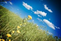 Flowering thistle Stock Image