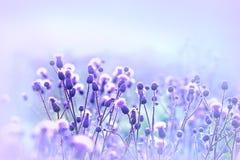 Flowering thistle - burdock Royalty Free Stock Photo