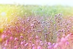 Flowering thistle - burdock Royalty Free Stock Photos